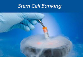 Stem cell Banking Information and Facts – Parents
